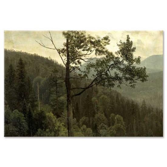 הרים מכוסים בעצים