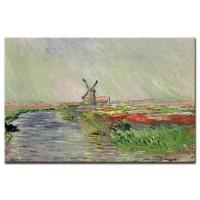 שדה צבעונים בהולנד