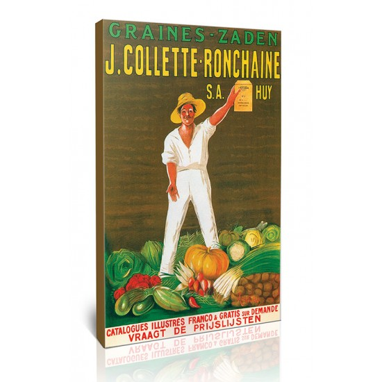 Collette Ronchain