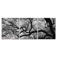 אנטומיה של עץ