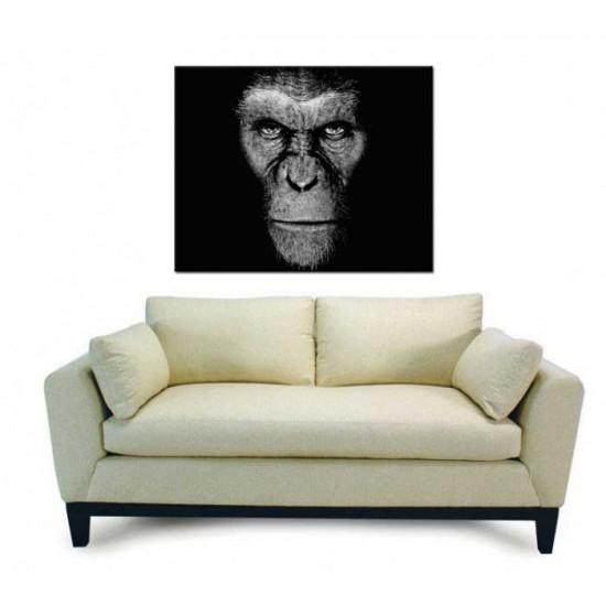 כוכב הקופים