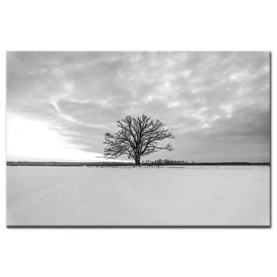 עץ בשלג