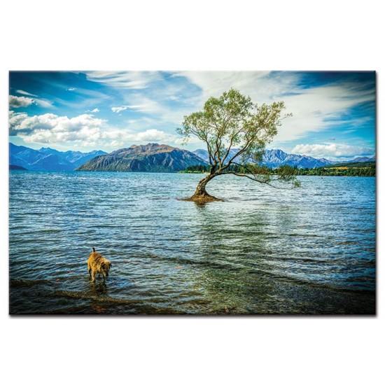 אגם ואנקה, ניו זילנד