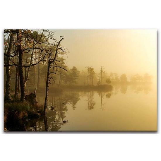 בוקר בביצות, אסטוניה