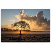 עץ בודד