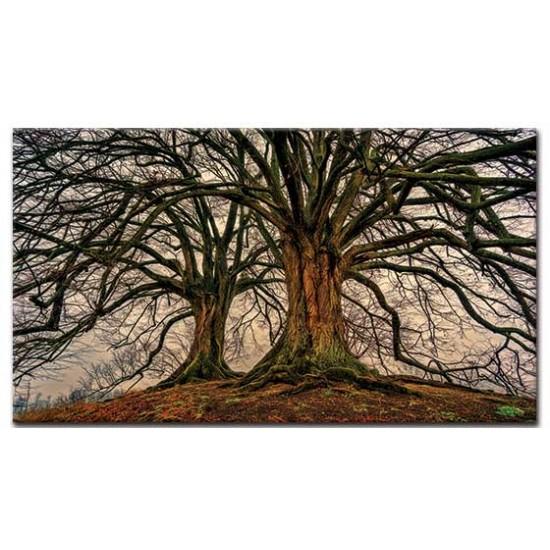 שני עצים