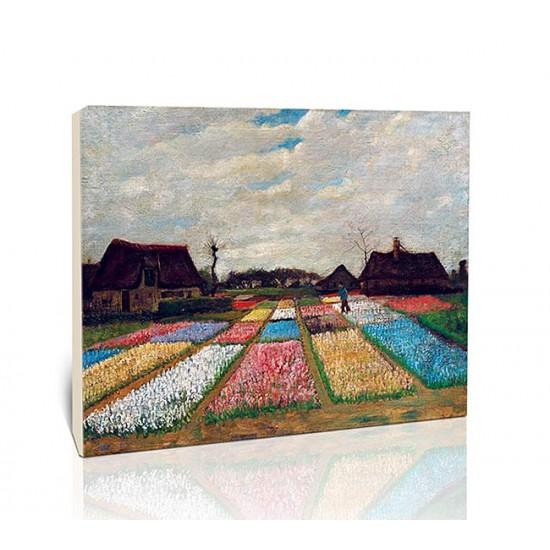 ערוגות פרחים בהולנד